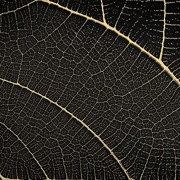 Patterns of Nature - Leaf Veins in Gold on Black Canvas No. 1 by Captain7