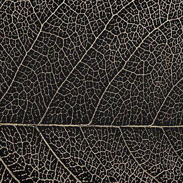 Patterns of Nature - Leaf Veins in Gold on Black Canvas No. 2 by Captain7