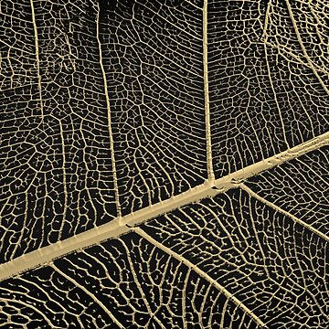 Patterns of Nature - Leaf Veins in Gold on Black Canvas No. 3 by Captain7