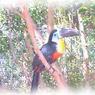 Toucan by MadTogger