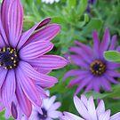 Purple Flowers #3 by Roselynn