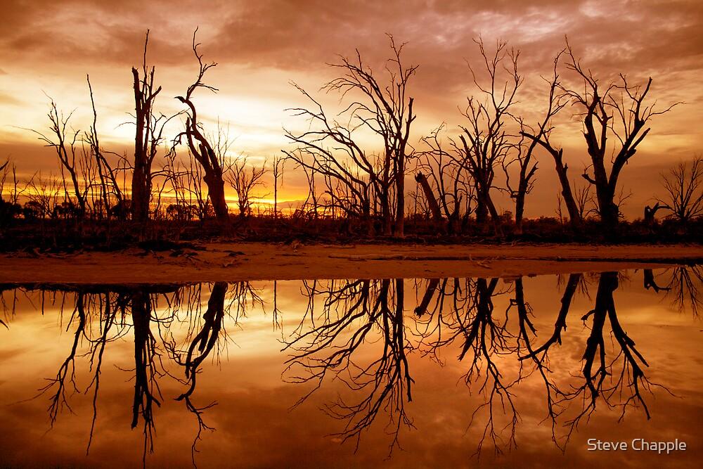 Golden Glow by Steve Chapple