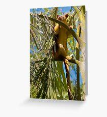 Goodfellow's Tree-Kangaroo Greeting Card