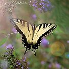 Butterfly print, tiger swallowtail, swallowtail butterfly, yellow butterfly, yellow swallowtail by Brandy Watkins
