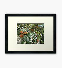 Crab Apples Framed Print