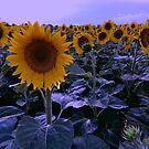 sunflower wonderland by Julia  Kovtunyak