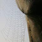 Web Sail by Sean Farragher
