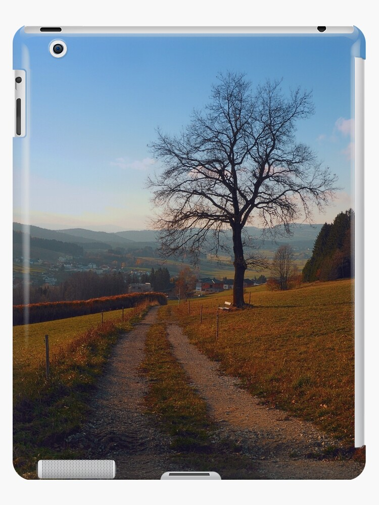 Tree, trail and indian summer evening | landscape photography by Patrick Jobst