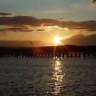 sailing sunset by sailing