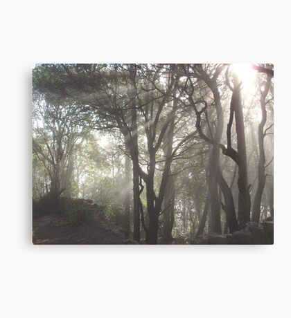 Nature's Rays Canvas Print