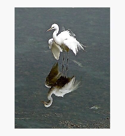 """""""Now, you're really ruffling my feathers!"""" Photographic Print"""