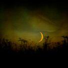 Sensual moonlight by Michel Raj