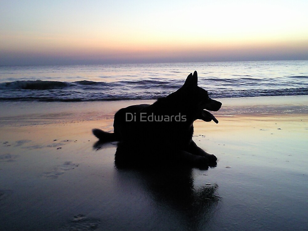 Sunrise Silhouette by Di Edwards
