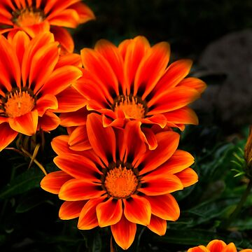 Orange You Glad II by alabca