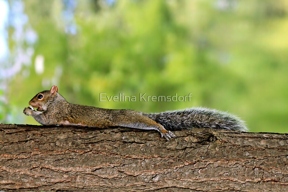 Chillin' With a Snack by Evelina Kremsdorf