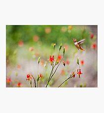 """Scarlet Kingdom, Revisited"" Photographic Print"