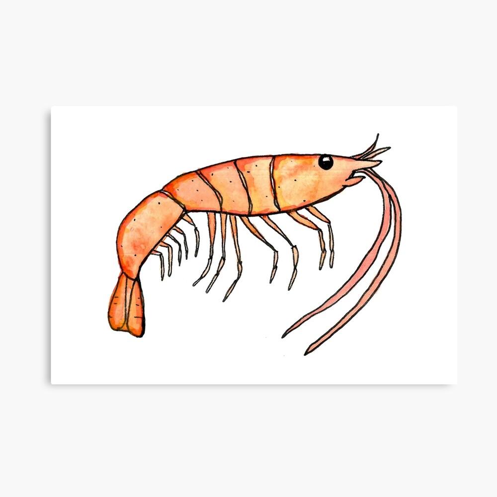 Prawn: Fish of Portugal Canvas Print