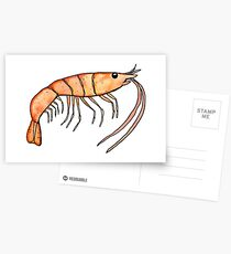 Prawn: Fish of Portugal Postcards