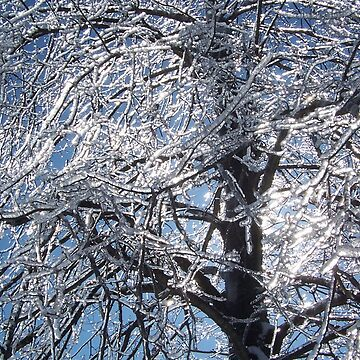 Ice In The Tree by BlackDogCountry