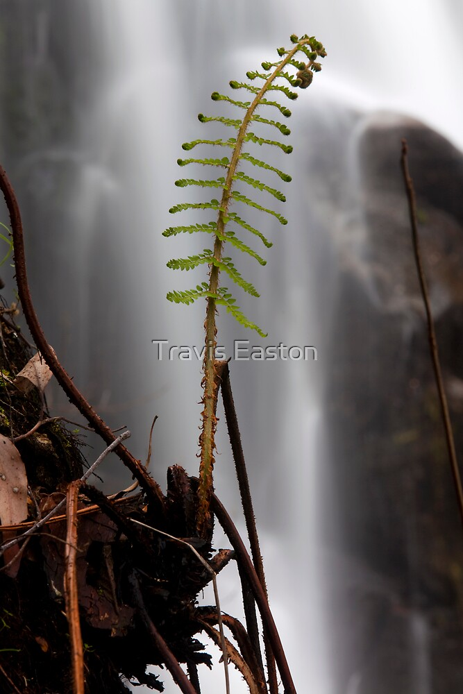 Life by Travis Easton