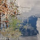 Serenity at the Pond  by John  Kapusta