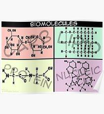 Biomolekül-Struktur-Plakat Poster