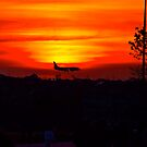 Plane landing during a brilliant sunset by dhphotography