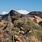 El Teide: Sparse Growth in the Caldera by Kasia-D