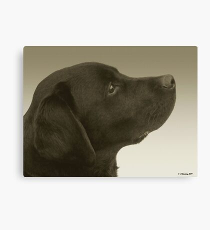 Young Cooper Canvas Print