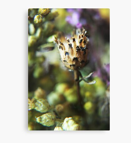 Like pineapple (from wild flowers collection) Canvas Print