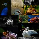 A Mosaic of Wild Life by maileilani