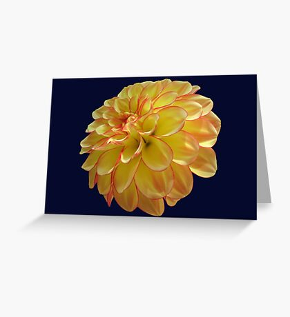Two Colored Dahlia Greeting Card