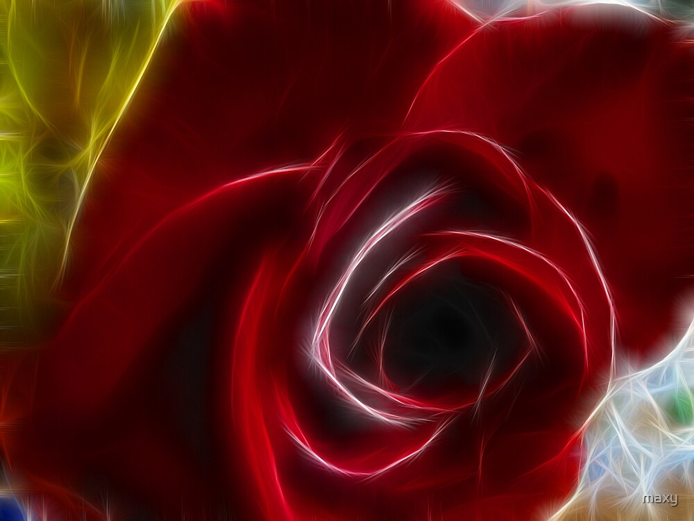 A Rose, sometimes is just a rose..... by maxy