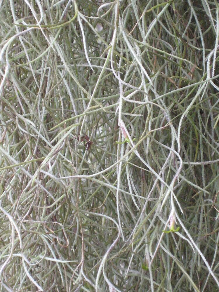 greenery by zoe trap