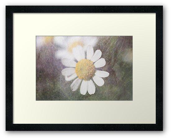 Daisy by Circe Lucas