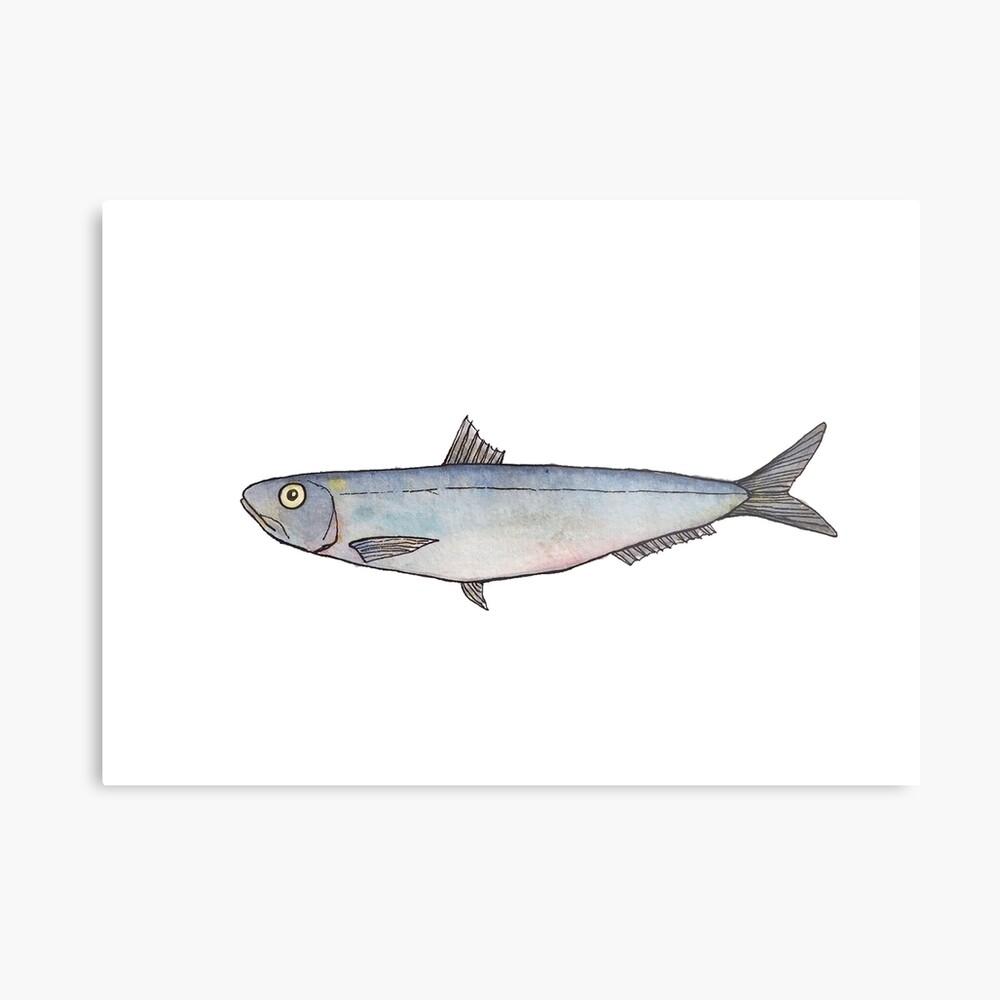 Sardine: Fish of Portugal Metal Print