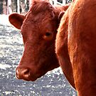 How Now Sweet Cow by ShotsOfLove