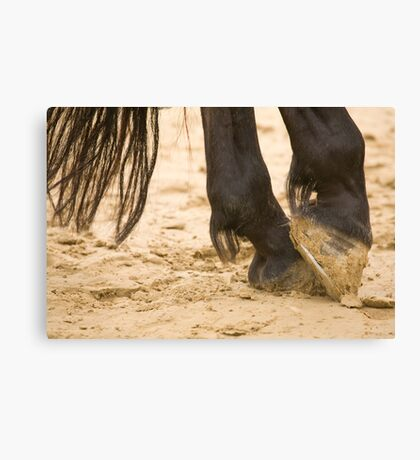 Black horses feet and tail Canvas Print