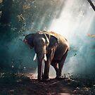 «Elefante» de La Chic