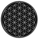 Flower of Life by Rupert Russell
