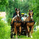 Horses by MarianaEwa