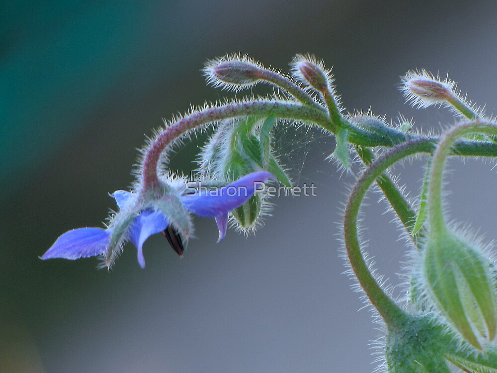 Feeling Blue by Sharon Perrett