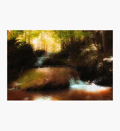 Falls Ridge Preserve, VA - 3 Photographic Print