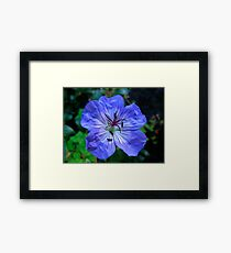 The Geranium Framed Print