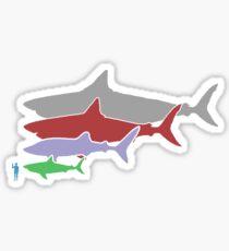 Megalodon Size Chart Sticker