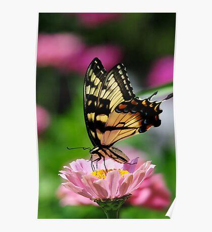 A FLOWER ROMANCE -V-  Poster