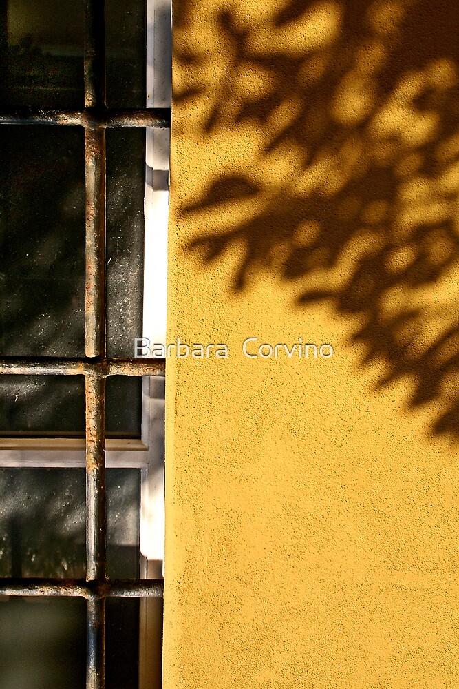 The tree's shadow by Barbara  Corvino