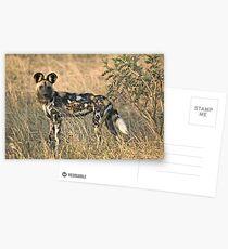 African Wild Dog Postcards