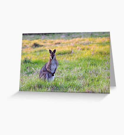 Wallaby Greeting Card
