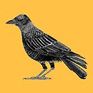 Corvid Collection Autumnal Crow by Evvie Marin
